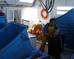 Les Viviers De Bassinic - Plouguerneau - Photos - En mer